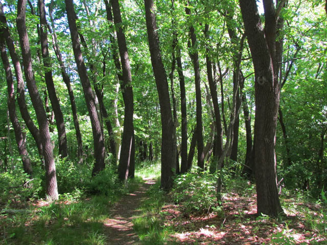 forest_5548