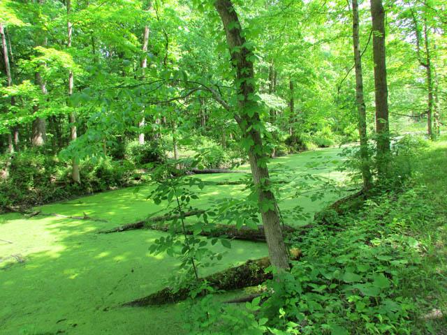 swamp_6036