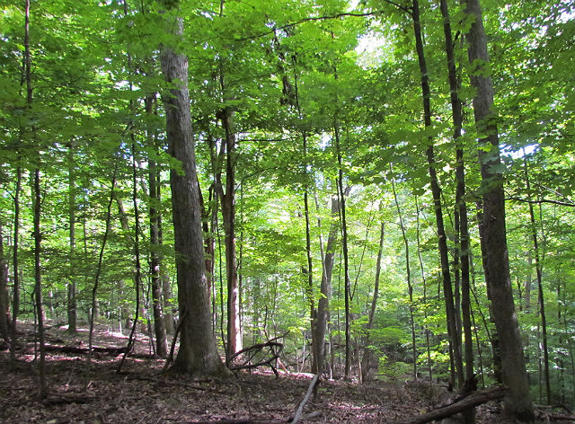 forest_09_16 029
