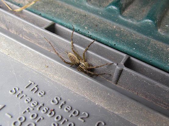 grass spider_4540