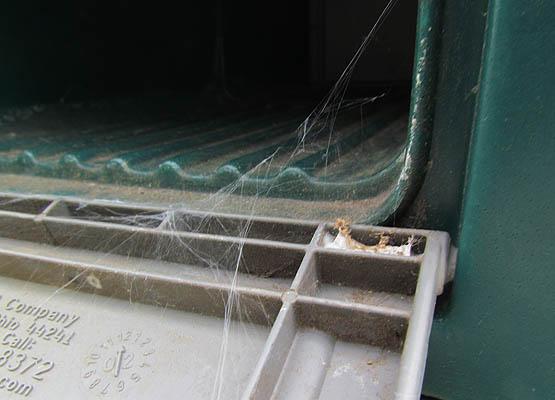 grass spider_4546