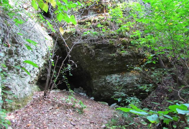 cave salamander_7999