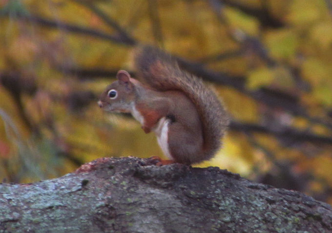 03 squirrel_9020