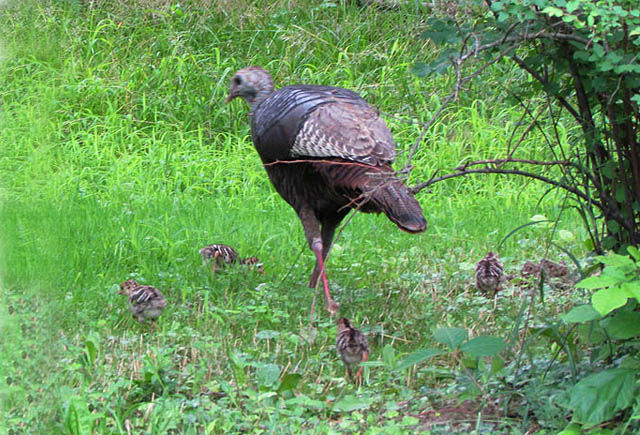 turkey_0212