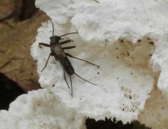 Winter Snowfly 102