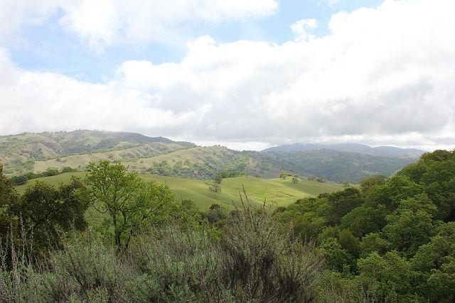 california newt 026