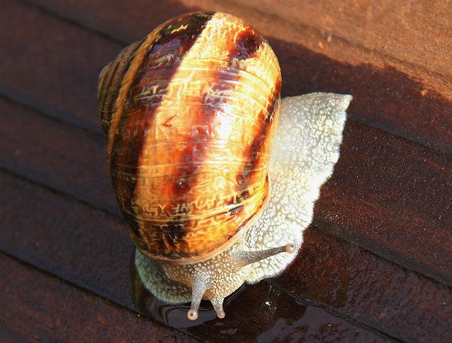 snail 006