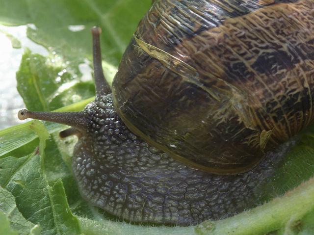 snail 134