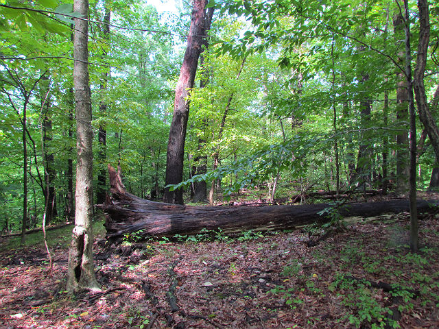 forest_09_21 016