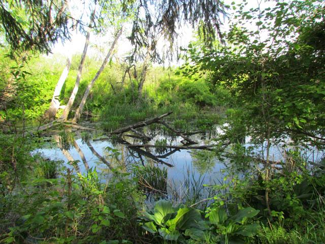 swamp 003