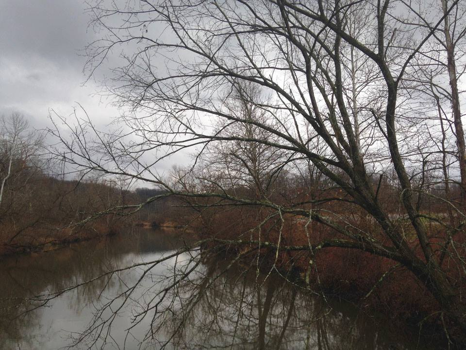 River Chub