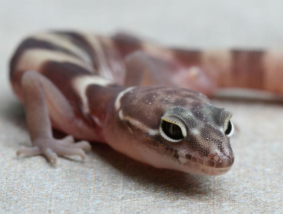 gecko_0516