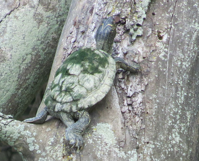 map turtle_4649