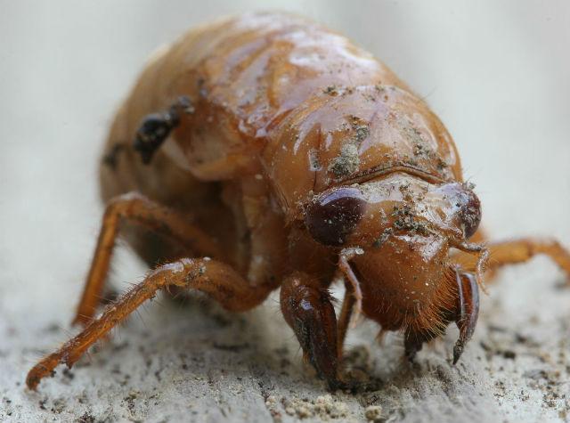 cicada_3644