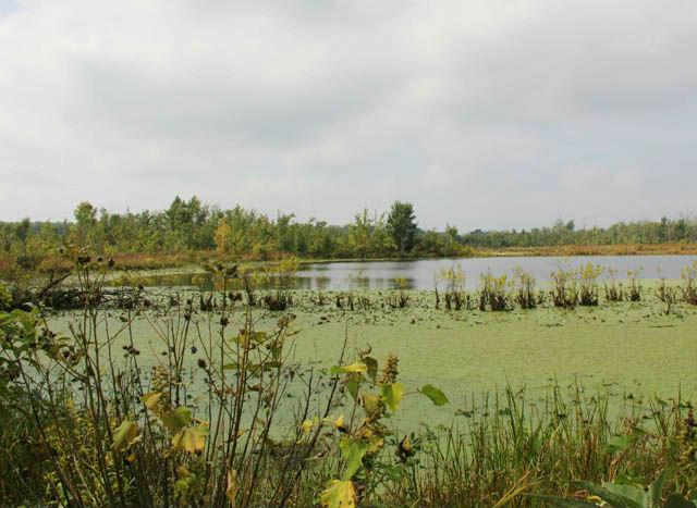 Mississippi Green Water Snake_1567