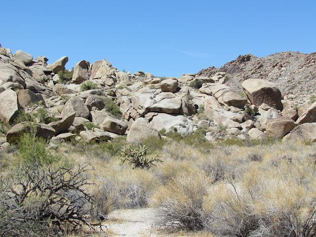 Desert Horned Lizard_7861