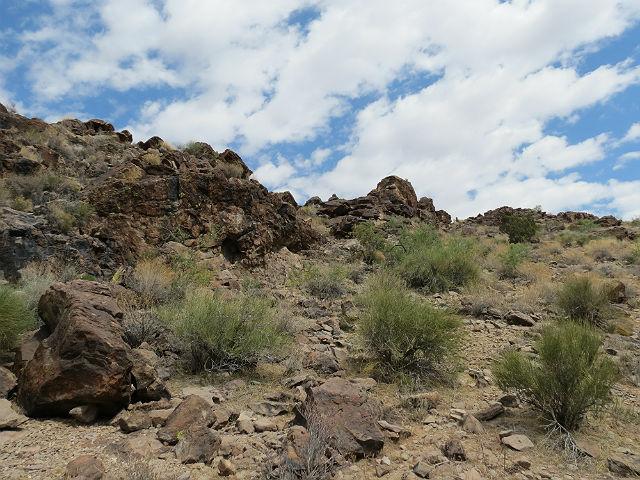 Mojave Rattlesnake_5396