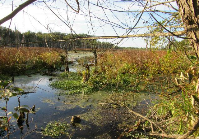 swamp_9249