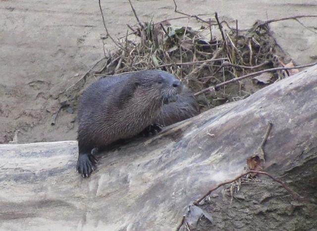 03 River Otter_1355